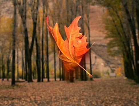 پاییـــز دوست داشتنی